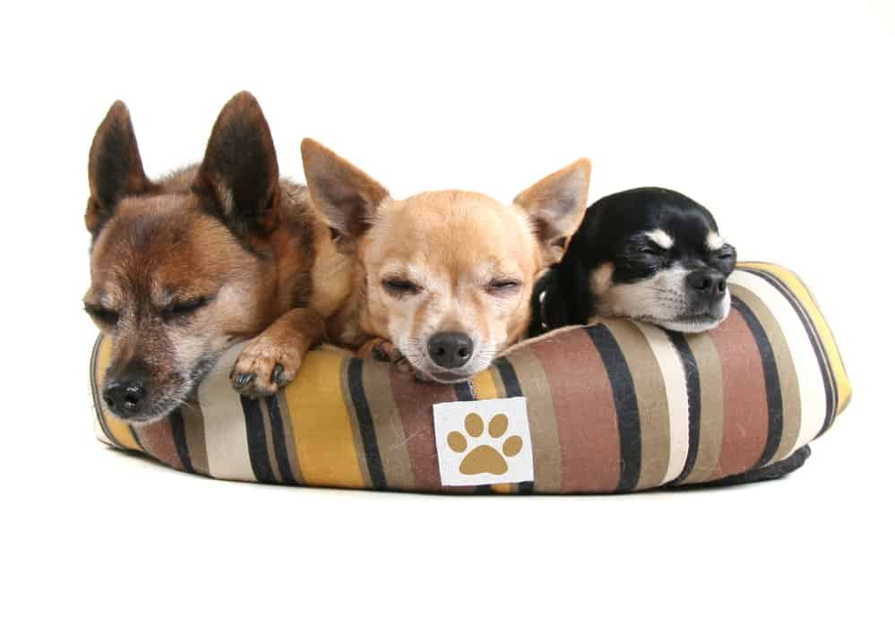 three dogs in a dog bed
