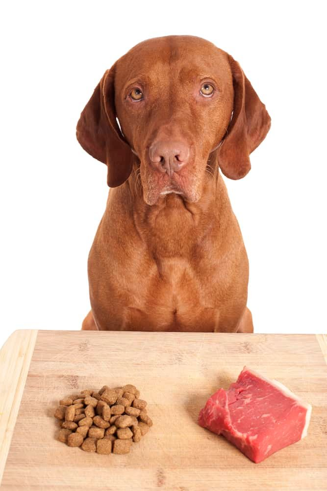 dog making a decision over kibbles versus raw diet