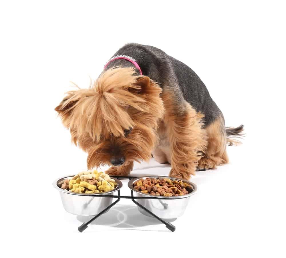 Dog smelling food bowl