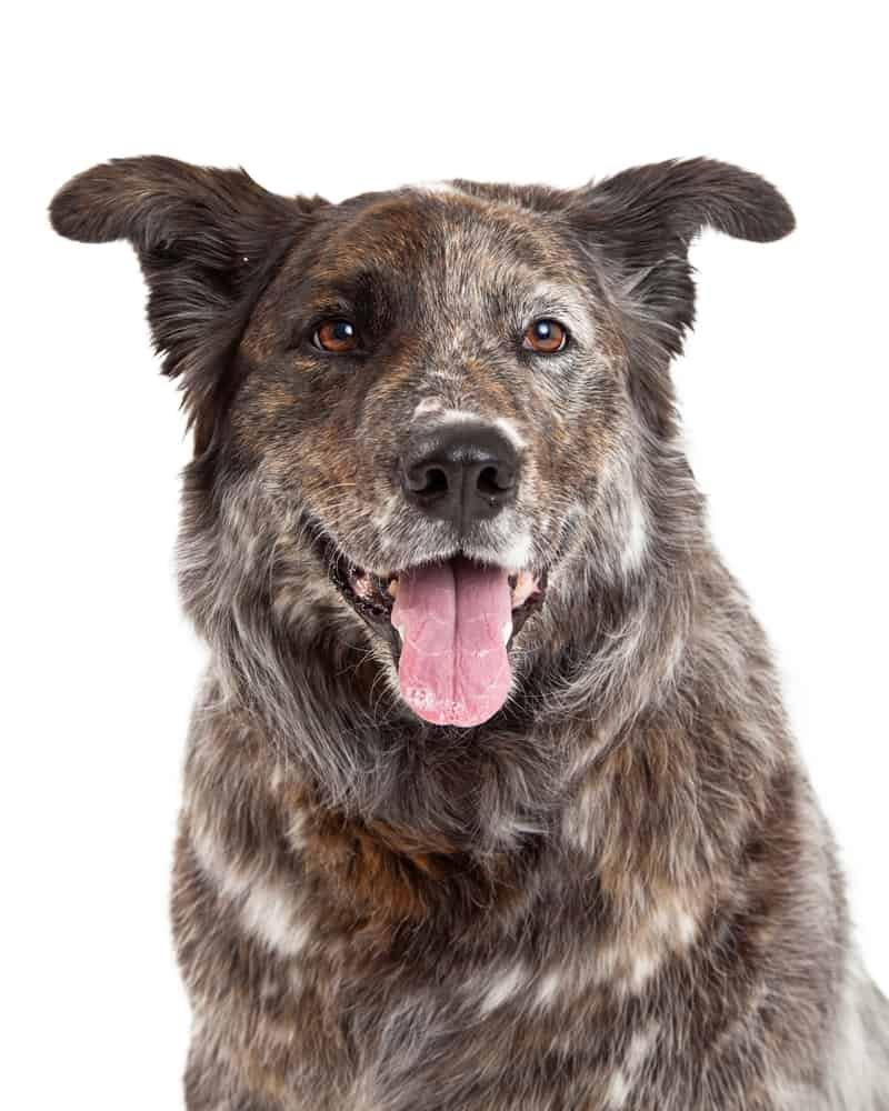 Happy mix breed dog