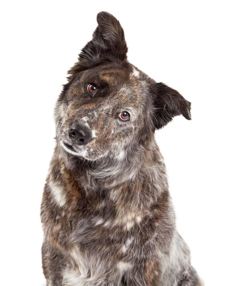 Mix breed dog