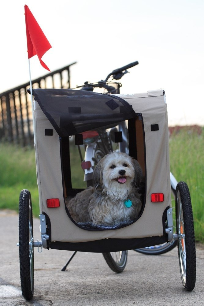 Little dog using a dog bicycle trailer
