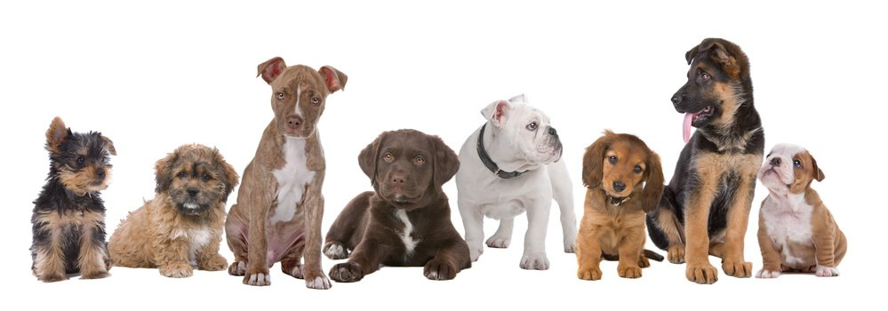 8 different breeds of puppies