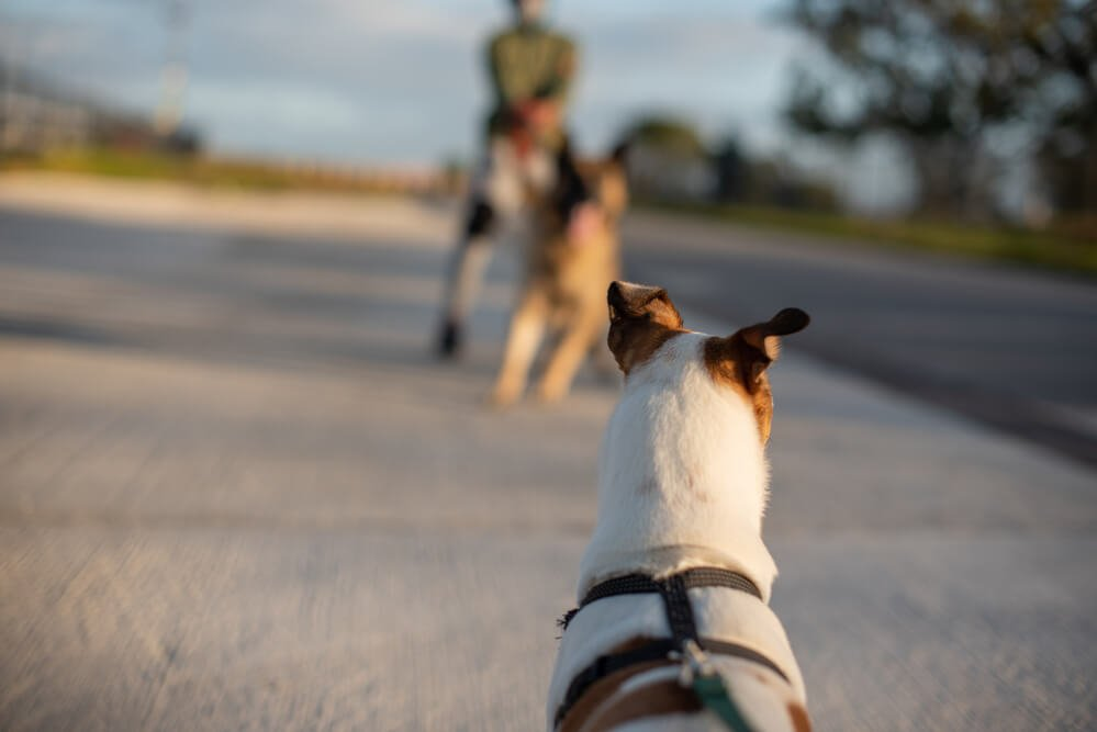 Dogs pulling on leash