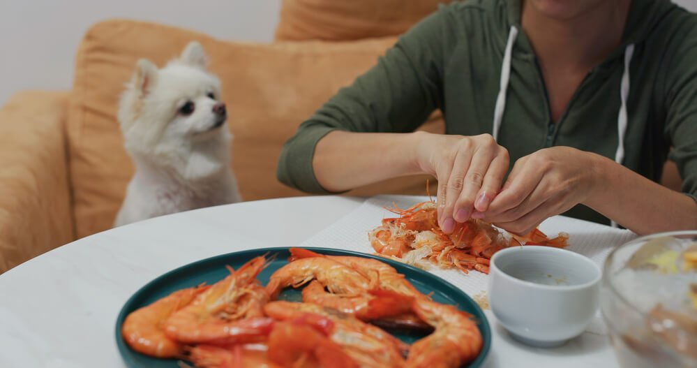 Eating prawns with dog sitting nearby