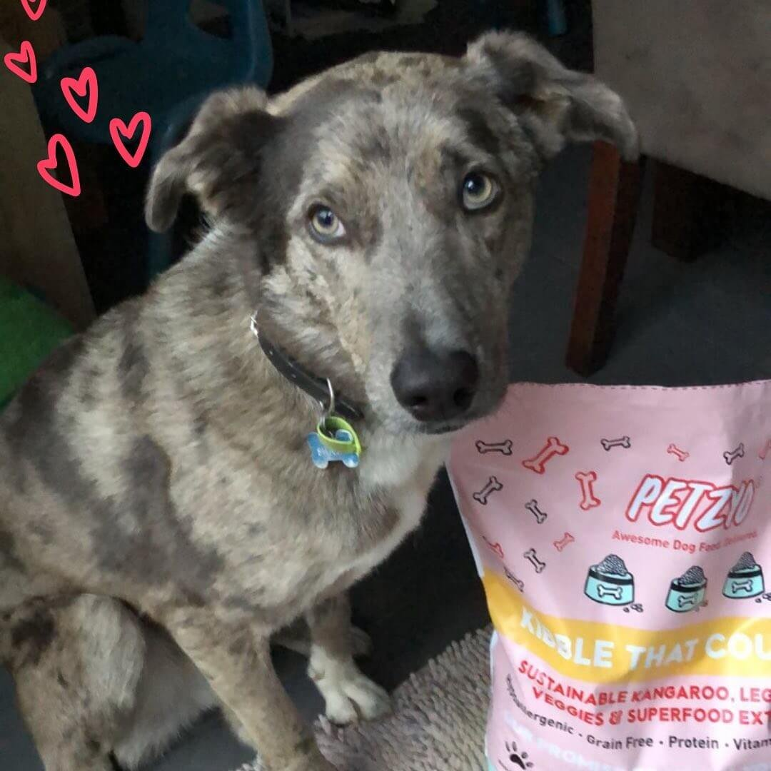 Koolie dog standing next to Petzyo dog food
