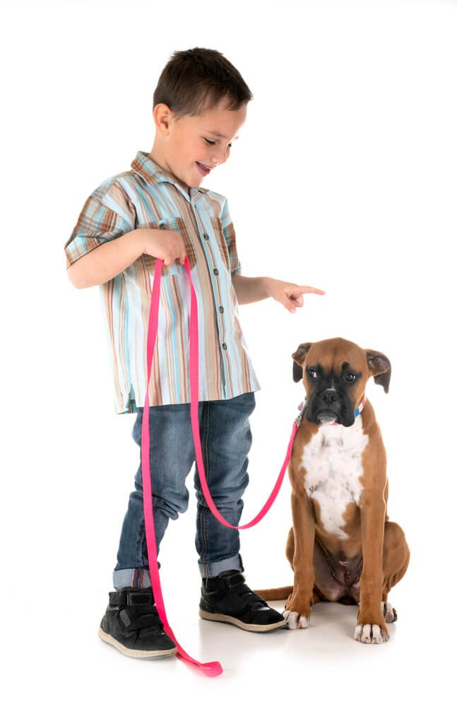 child training a puppy to loose leash walk