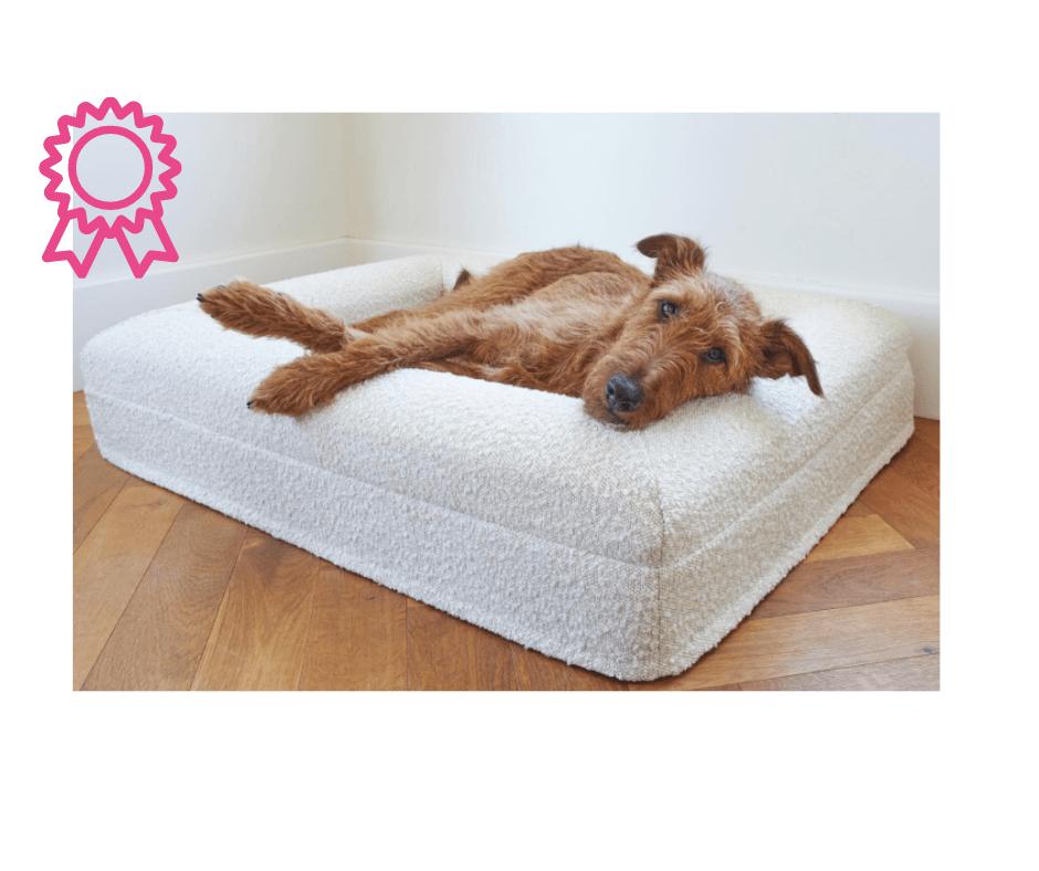 Irish Terrier in a Barney Bed