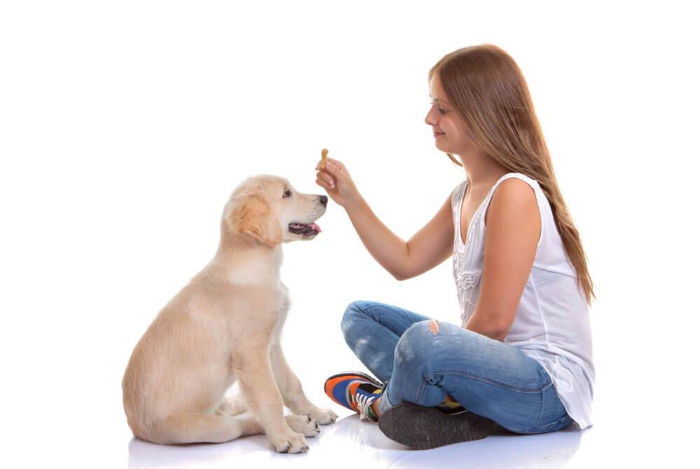 Young girl training a Labrador puppy